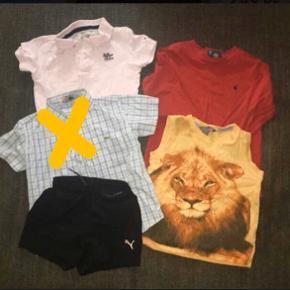 104 Tøjpakke tøjpakker  Ralph lauren rød bluse Lacoste ternet lyseblå solgt skjorte Tommy Hilfiger polo trøje lyserød sorte Puma shorts gul trøje med løve