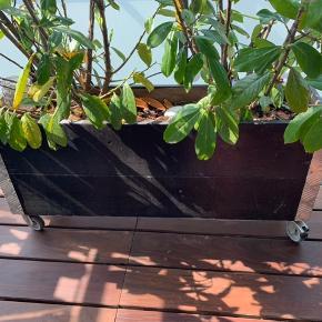 Stor lækker plantekasse som jeg desværre ikke har plads til mere  Måler 100x50 Jeg fjerner planter/jord så den er ben st transportere