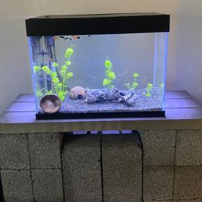 Superfish crystal 100 akvariesæt 75 liter  Inklusiv X-pro 400 pumpe. +varmelegeme samt sten og pynt i akvarie. Brugt i 5 måneder, fejler intet. Der medfølger diverse akvarie ting: Net Slange til tømning af akvarie  Svamp til at rense glas Vat til pumpe  Lecablokke følger med.    BYD gerne!
